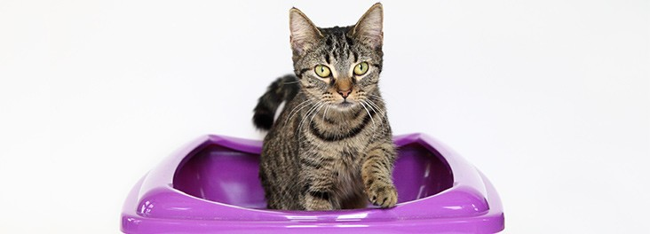 Cleaning the Cat Litter Tray - Feline Friendly Care