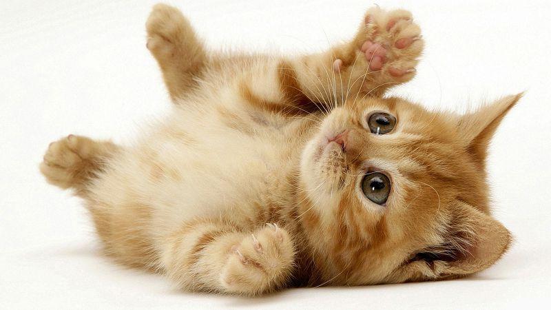 How To Remove Cat Urine - Feline